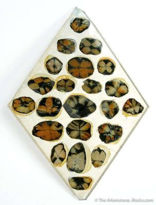 Andalusite Var. Chiastolite (Reference Set Of Thin Sections)