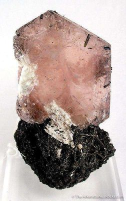 Morganite With Albite on Schorl