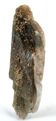 Scheelite, Quartz (Var: Smoky Quartz)