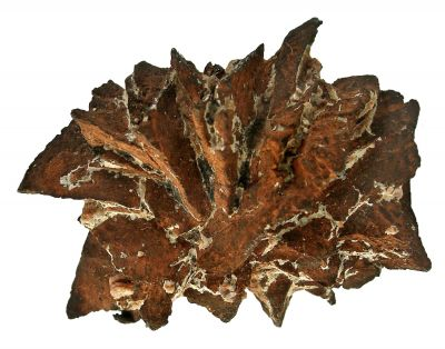 Copper Pseudomorph After Azurite