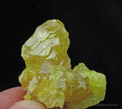 Sulfur (2 Generations)