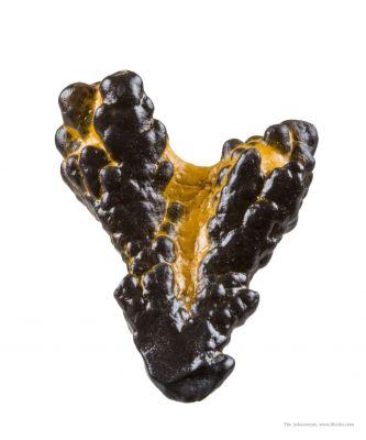 Manganese Biominerals (Todorokite, Romanechite, Birnessite)