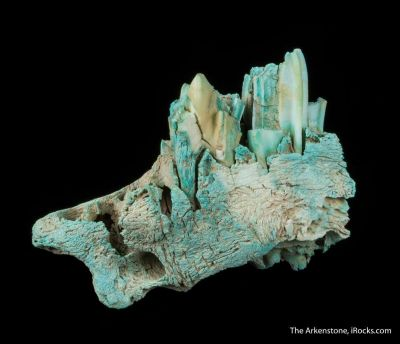 Turquoise ps. after Bone (Odontolite)