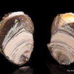 Copper replacing Agate Nodule