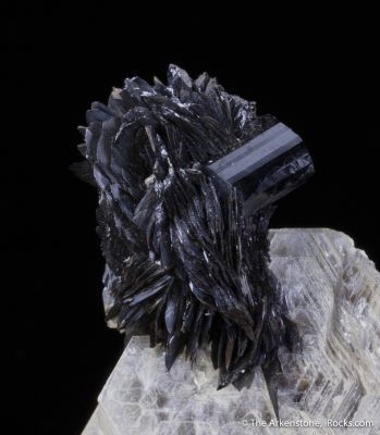 Tantalite on Muscovite with Schorl