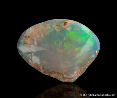 Opal replacing Mollusk fossil