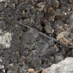 Galenobismutite on Muscovite and Quartz