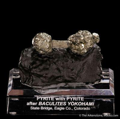 Pyrite on Pyrite ps. Baculites Yokohami